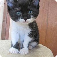 Adopt A Pet :: Susie Q - Mobile, AL