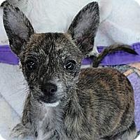 Adopt A Pet :: Fiona - Garden Grove, CA