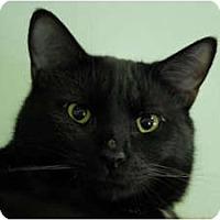 Adopt A Pet :: Wally - Lunenburg, MA