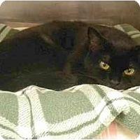 Adopt A Pet :: Scruffy - Montgomery, IL