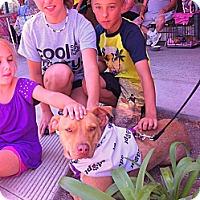 Adopt A Pet :: BELLA - Ojai, CA