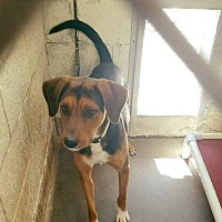 Adopt A Pet :: Davie - Staunton, VA