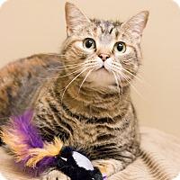 Adopt A Pet :: Jess - Chicago, IL