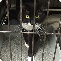 Adopt A Pet :: Peppers - Simpsonville, SC