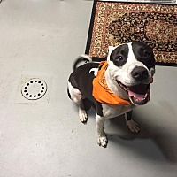 Adopt A Pet :: BUDDY - Pittsburgh, PA