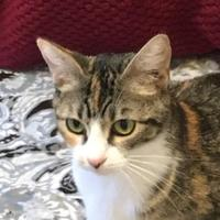 Adopt A Pet :: Daisy - Bastrop, TX