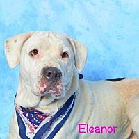 Adopt A Pet :: Eleanor - Golsboro, NC
