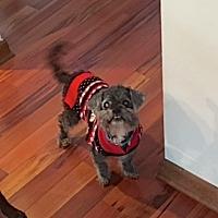 Adopt A Pet :: Murphy - Sparta, NJ
