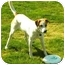 Photo 1 - German Shorthaired Pointer/Boxer Mix Dog for adoption in Tracy, California - Sophie
