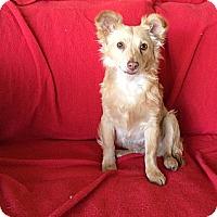 Adopt A Pet :: Grady - Tustin, CA