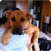 Adopt A Pet :: TEDDY - Malibu, CA