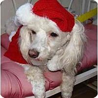 Adopt A Pet :: Betzee - Tallahassee, FL