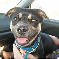 Adopt A Pet :: Beso - Poway, CA