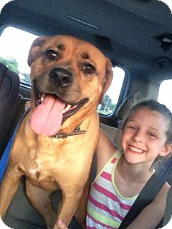 Boxer/Labrador Retriever Mix Dog for adoption in Media, Pennsylvania - Princess