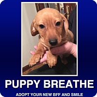 Adopt A Pet :: Sebastian 'Bash' - Morrisville, PA