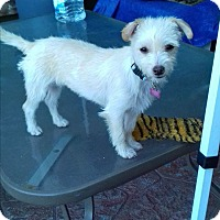 Adopt A Pet :: Cici - San Diego, CA