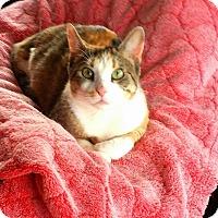 Adopt A Pet :: Mazel - Chicago, IL