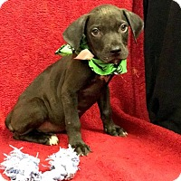 Adopt A Pet :: NEBULA - Bryan, TX