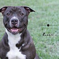 Adopt A Pet :: Runner - Houston, TX