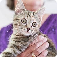 Adopt A Pet :: Andie - Homewood, AL