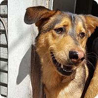 Adopt A Pet :: Fu Man Chu - Houston, TX