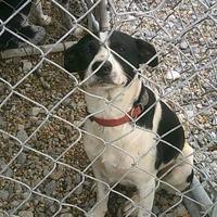 Adopt A Pet :: Spot - Opelousas, LA