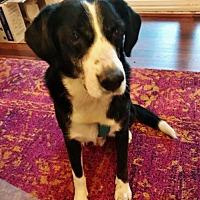 Adopt A Pet :: Kelt - Alpharetta, GA