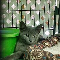 Adopt A Pet :: Stormy - Bloomingdale, NJ