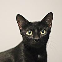 Adopt A Pet :: Maizey - Lincoln, NE