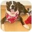 Photo 3 - Boxer Mix Dog for adoption in Cincinnati, Ohio - Bugger
