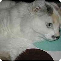 Adopt A Pet :: Mathilda - Beverly Hills, CA