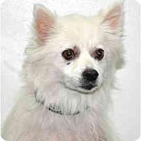 Adopt A Pet :: Tuppence - Port Washington, NY