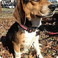 Adopt A Pet :: Woodstock - Richmond, VA