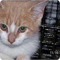 Adopt A Pet :: Brin - Riverside, RI