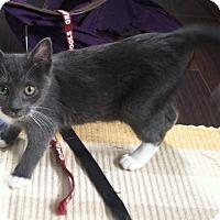 Adopt A Pet :: Ashlynn - Byron Center, MI