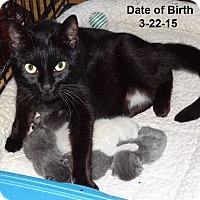 Adopt A Pet :: Malinda - Bentonville, AR