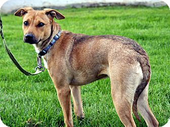 Catahoula Leopard Dog Mix Dog for adoption in Woodburn, Oregon - Macey