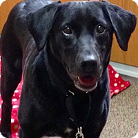 Adopt A Pet :: Hallie - Chattanooga, TN