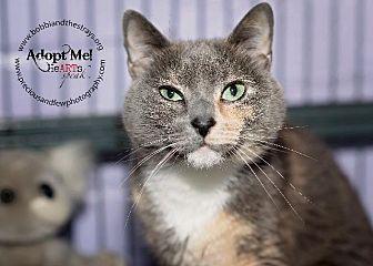 Siamese Cat for adoption in Freeport, New York - Pretty (Kitty)