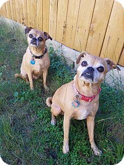 Pug/Chihuahua Mix Dog for adoption in Von Ormy, Texas - Emma & Mattie