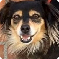 Adopt A Pet :: ELIZABETH (video) - Los Angeles, CA