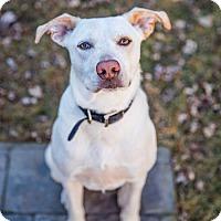 Adopt A Pet :: Dillon - Round Lake Beach, IL