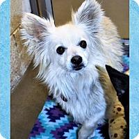 Adopt A Pet :: Radar - San Jacinto, CA