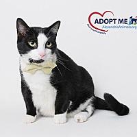 Adopt A Pet :: Cookie - Alexandria, VA