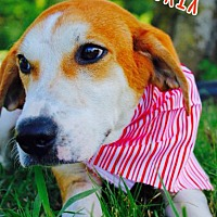 Adopt A Pet :: Matrix - Batesville, AR