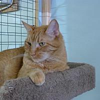 Adopt A Pet :: Cheeto - Quincy, CA