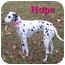 Photo 2 - Dalmatian Mix Dog for adoption in Bloomsburg, Pennsylvania - Hope