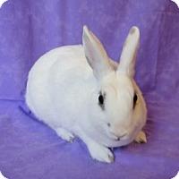 Adopt A Pet :: SuperNova - Los Angeles, CA