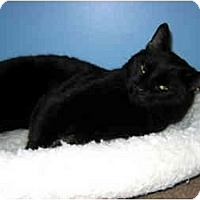 Adopt A Pet :: Salem - Medway, MA