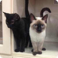 Adopt A Pet :: Stanford and Jersey - Chandler, AZ